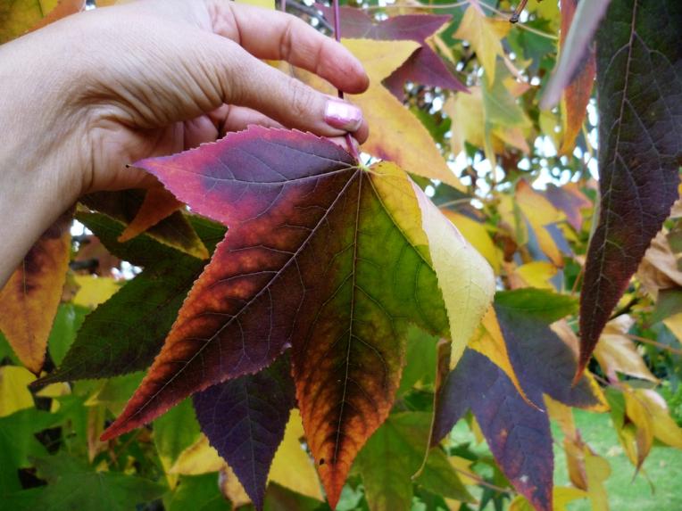 Colours of Autumn - Autumn leaves