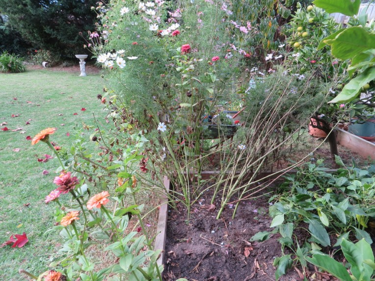 Chores in Autumn, Make space for winter planting